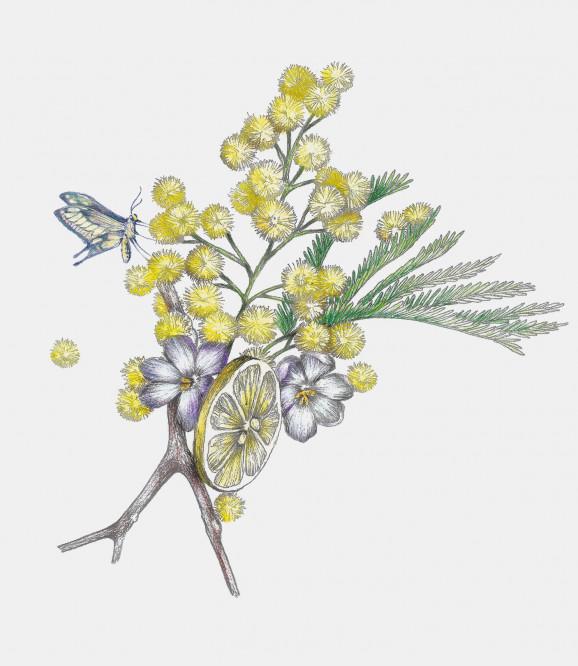 Fragranced Candle Fleur De Mimosa